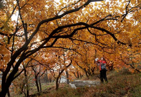 北京香山红叶节赏景攻略:索道沿线最美