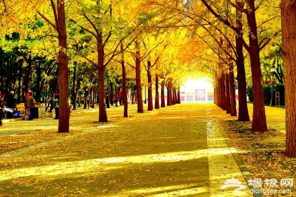 走进秋天的童话 京郊赏秋好去处[墙根网]