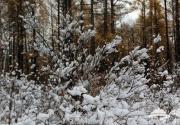 秋季去东北看雪 东北最美的六大赏雪地是哪儿?