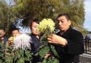 2014北京市第三十五届菊花(市花)展 北海独悠