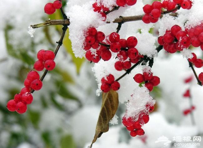 北京冬季旅游胜地 京郊龙庆峡