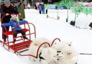 2015北海公园冰雪节 滑雪 玩雪 赏雪雕 这边风景独好