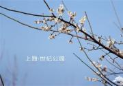 2015上海世纪公园赏梅游园会