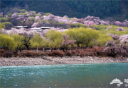 2015林芝桃花节(嘎拉村)赏花攻略