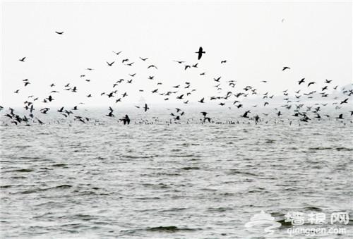 清明出游 菩提岛祈愿、观鸟、放风筝[墙根网]
