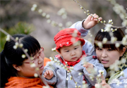 3-4月份看北京植物园都有什么花开了