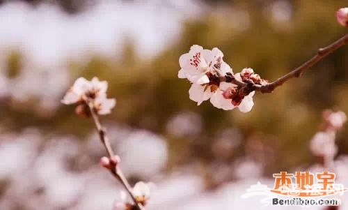 北京西山国家森林公园踏青赏花指南