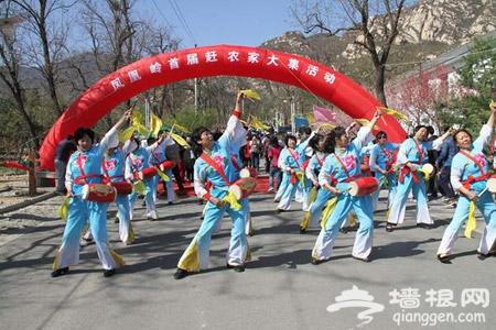 2015年北京凤凰岭第十五届杏花节