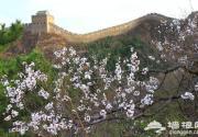 2015八达岭杏花节时间地址门票及交通路线