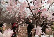 2015年玉渊潭公园第27届樱花文化活动