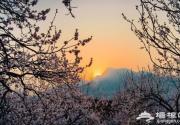 河北自驾全攻略 徜徉花海享受美丽春天