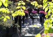 2015首届陶然亭海棠花节明天迎客 3000余株海棠竞相盛开