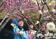 北京135处春季赏花片区迎游客 景山牡丹花花开动京城