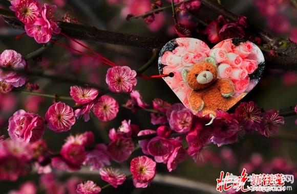 2015鹫峰梅花节开幕