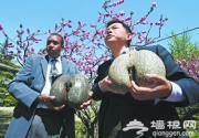 塞舌尔国宝赠北京植物园
