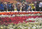 北京植物园百花盛开静待游客