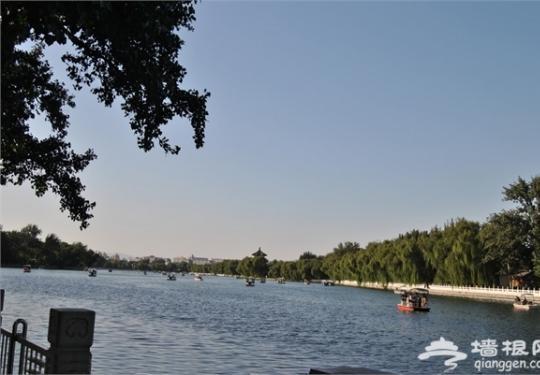 北京后海野鸭破壳首次下水 初夏带你一起游后海!