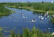 天津七大湿地公园 迎立夏好去处