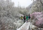 大光圈网友实拍京西灵山五月飘雪