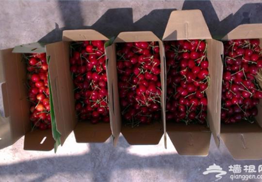 盘点北京京郊樱桃采摘种植园 送走了草莓迎接红樱桃吧