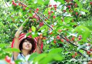 韭园村:在最美乡村,摘玲珑,品玛瑙