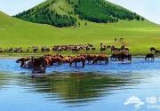 """有一种旅行叫做""""夏天去草原"""""""