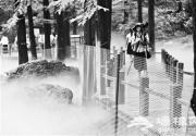 """游客下桥拍照踩死植物 北京植物园水杉栈道""""仙境""""拉铁丝网"""