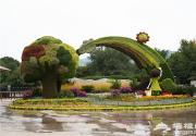 北京植物园百亩花海迎抗战胜利70周年