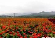 最美的花期 去延庆看最美的风景