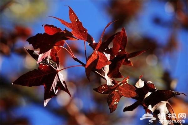 河北最美的赏红叶去处 你知道几个?[墙根网]