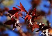 河北最美的赏红叶去处 你知道几个?