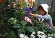 2015首届苦苣苔科植物展在北京植物园举办