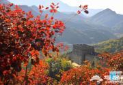迎双节 15处花卉景观扮靓八达岭长城