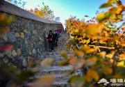又到一年赏红时 识香山:五环内海拔最高的公园