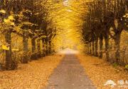 """这个深秋,一起寻找""""秋""""的味道"""