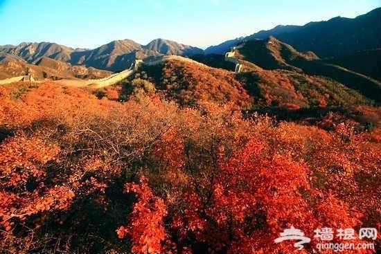 赏红叶品古长城 八达岭森林公园去秋游