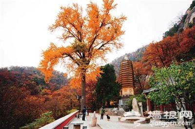 2015蓟县盘山红叶节将开幕