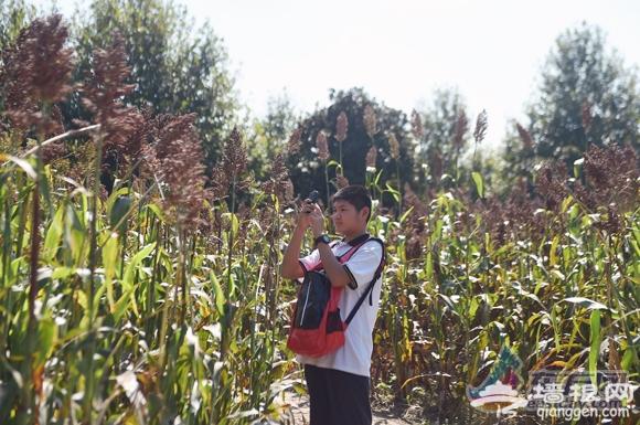 2015上海世纪公园游园会开幕 黑猫警长小羊肖恩齐上阵[墙根网]