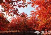 上海最佳秋叶观赏景点大搜罗