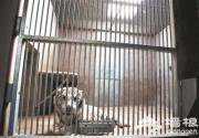 """北京野生动物园大型兽舍""""变脸"""" 动物越冬添福利"""