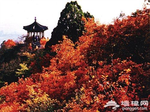 九九重阳节 北京哪些山适合登高?