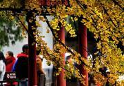 北京:美丽秋季到来