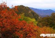 保定易县狼牙山举办红叶节 引3000余游客观赏