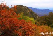 狼牙山紅葉正當紅 攝影愛好者深秋采風