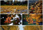 园博园里赏秋色
