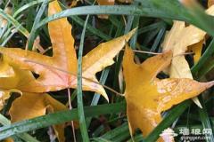 抓住秋天的尾巴 北京红叶观赏地推荐