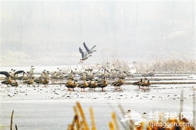 """""""鸟类天堂""""野鸭湖"""