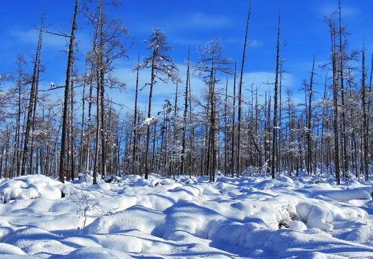 """最早赏雪去处大比拼 各地雪景""""宫心计"""""""