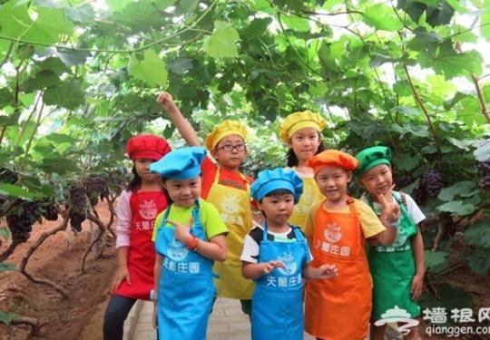 北京11月带孩子去哪玩?密云天葡庄园亲子活动