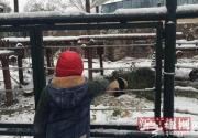 雪天看动物 北京动物园游客兴致不减